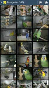 Izmirde papağan