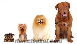 Nevşehir Köpek Eğitim Merkezi