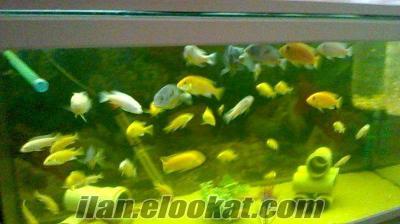sarı ve beyaz prenses yavruları 1-2 cm neredeyse bedava !!!