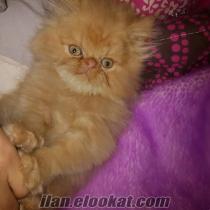 iran kedim 2 aylık