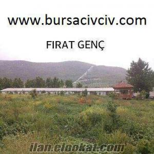 BURSADA ÜRETİCİDEN SATILIK HİNDİ CİVCİVİ