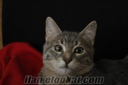 Çankayada kayıp kedi