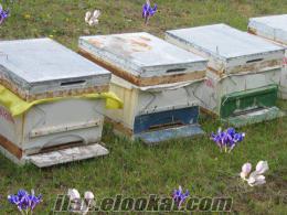 Bal Arısı 9 - 10 çıtalı Kovanlar