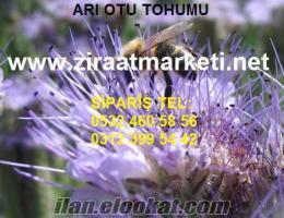 Arı otu, Arı otu tohumu, arıotu tohumu, arı otu tohumu fiyatı, arı otu tohumu fi