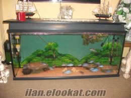 Acil komple akvaryum ve yunus kolonisi