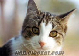 Ücretsiz Kedi ANTALYA