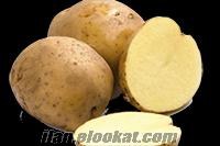 Belmando Patates Tohumu