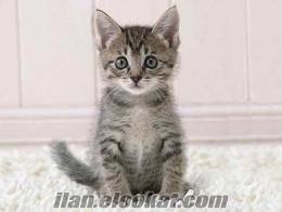 edirne ücretsiz yavru kedi