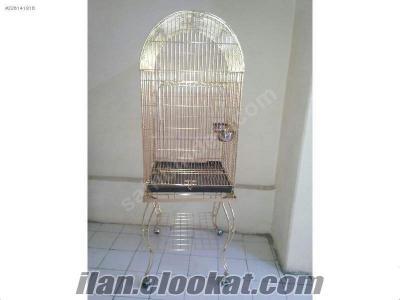 Acil Satılık Amazon Papağanı ve Dev Kafesi