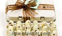 toptan bıldırcın yumurta satışı