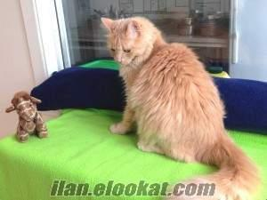 ADANA KÖPEK kedi kuaför pansiyon hizmeti