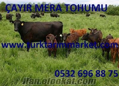 çayır mera tohumu fiyatı, çayır mera tohumları, çayır ve mera tohumu, çayır m