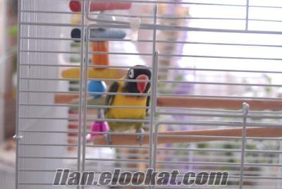Cennet + Sevda papağanı