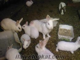 Yozgatta tavşan satışı