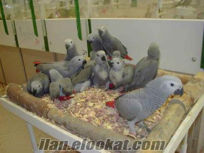 Kadıköy jako papaganı