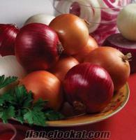 satılık kuru soğan