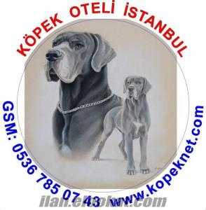 KÖPEK OTELİ FATİH ÇAPA SEMTİ / İSTANBUL
