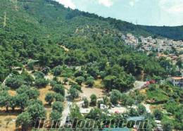 torbalı korucuk köyünde müstakil tapulu 6dönüm zeytinlik tarlası