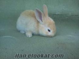 Eskişehirde yavru tavşan