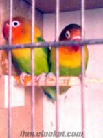 adanada sahibinden satılık kuş çeşitleri