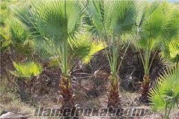 ucuz süs bitkileri burada