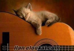 Gitarist solist aranıyormu dediniz? Gitarist solist aranıyor mu dediniz?