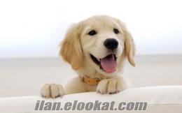 Ücretsiz köpek bakma