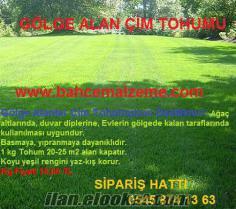 GÖLGE ALAN ÇİMİ, gölge alan çimi, gölge çimi fiyatı, gölge çimi fiyatları, gölge