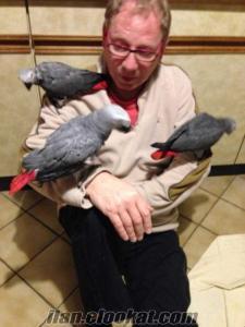 acil satılık uygun fiyat jako papağanı kafesiyle