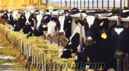 hayvancılık yatırım danışmanlık hizmeti