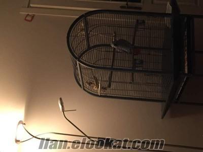 Satılık Jako Papağanı Fiko (kafesi ile birlikte)