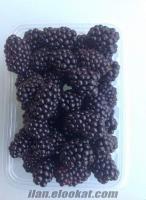 Yeni mahsül böğürtlen meyvesi