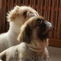 Kadıköy köpek gezdiricisi
