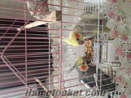 Bağcılar sultan papağan