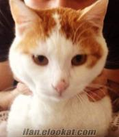 ıstanbulda acil sahibinden ücretsiz kedi
