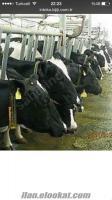 islam et tarım ve hayvan cılık