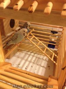 Hersey dahil Ahşap el Yapımı kafes ankara cift kuş
