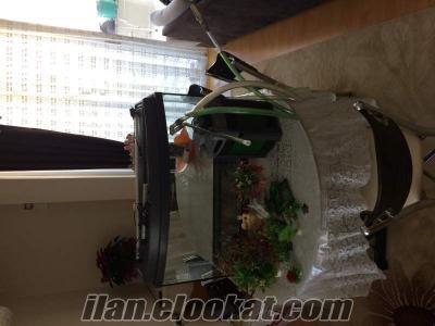 İzmir Buca satılık akvaryum