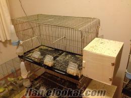 65 lik çifthane kafes ve muhabbet kuşları