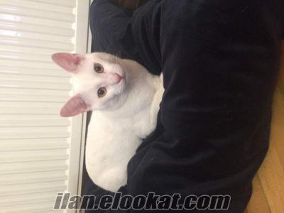 Casper yuva arıyor (evinde en az bir kedisi olmak şartıyla)