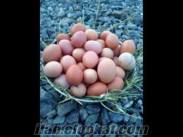 trabzondan günlük köy yumurtası
