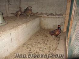 Komple satılık süs hayvanları Takımları