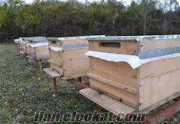 samsunda satılık kovanlı 30 arı