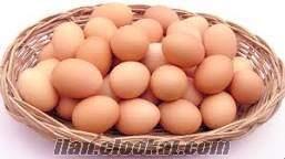 Organik köy yumurtası açıklamayı mutlaka okuyun adrese teslim 20 krş