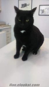 Kara Kedinin uğuruna inananlardan mısınız? Mucizeme tanık olun.