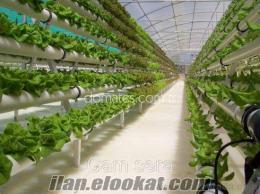 topraksız tarım sera