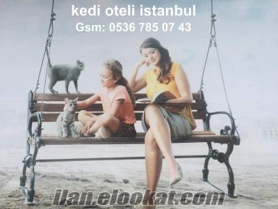 kedi oteli çapa semti fatih / istanbul