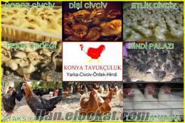 Konya Tavukçuluk Yarka Civciv Ördek Hindi Tavuk Satışı
