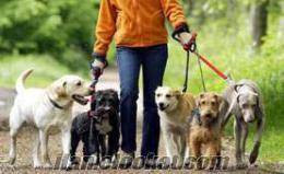 veteriner fakültesi öğrencisinden köpek gezdirme hizmeti