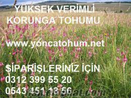 KORUNGA TOHUMU, korunga tohumu fiyatları, korunga tohumu fiyatı, korunga tohumu